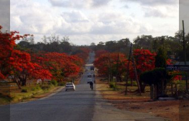 Flame trees lining the main street in Mtwara